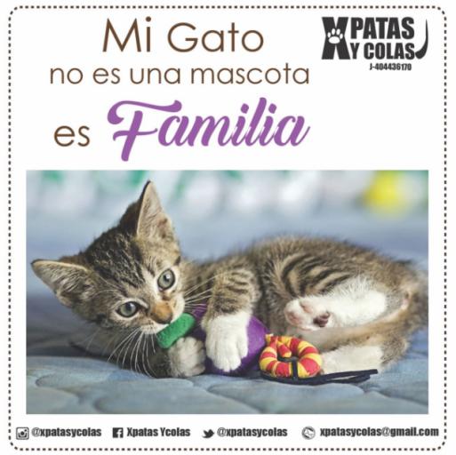 familia_xpatascolas